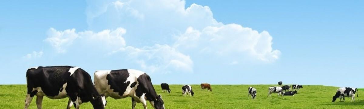 Pieno ūkiai