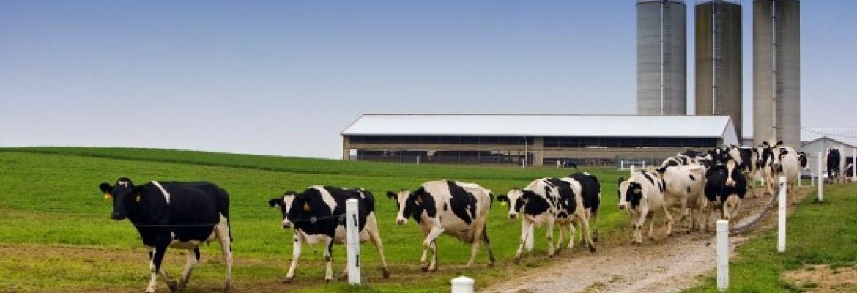 Pieno supirkimo kaina šiek tiek padidėjo